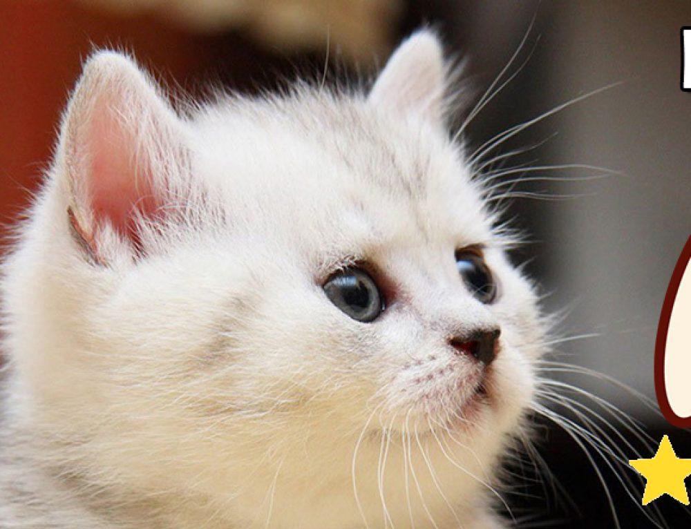 ¿Como cuidar a un gato?