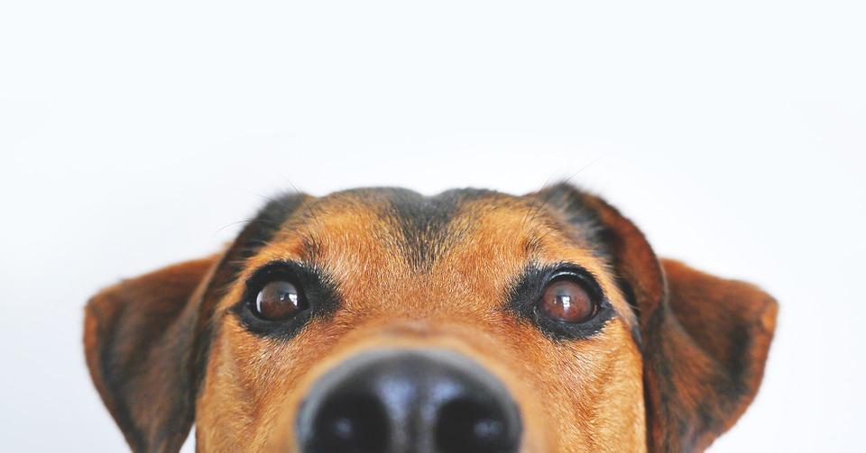 cuidados de un perro