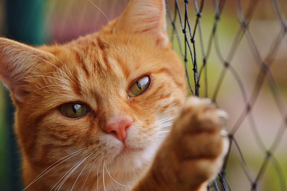Por qué a los gatos no les gustan las puertas cerradas