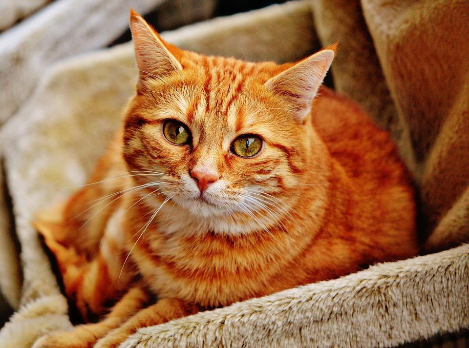 Castigos para gatos: ¿sirven de algo?