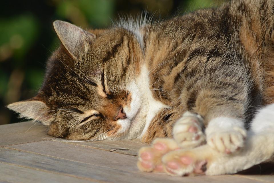 Mi gato duerme mucho, ¿por qué?