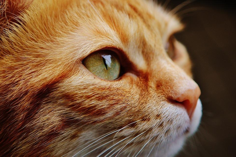 ¿Se deben cortar las uñas del gato?