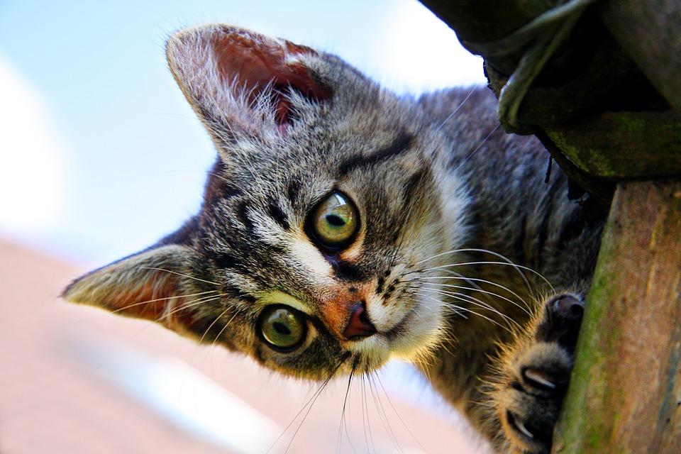 5 mitos sobre gatos