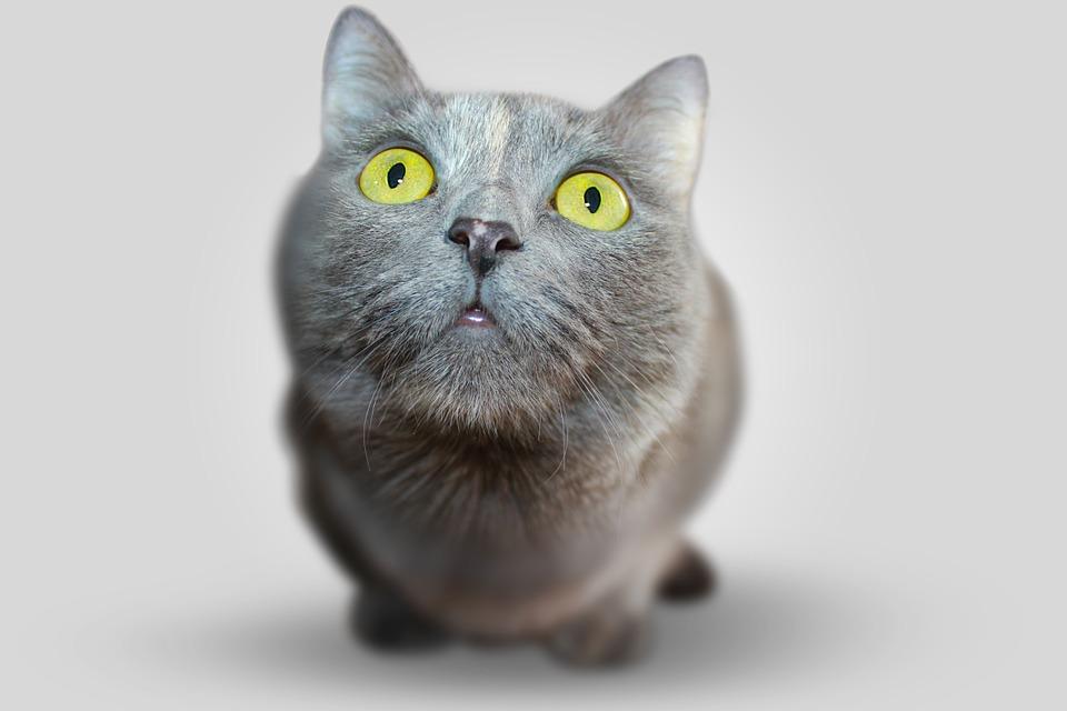 Ventajas de la esterilización en gatos