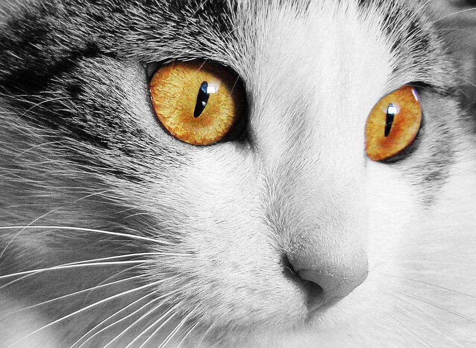 ¿Qué hago si mi gato es hiperactivo?