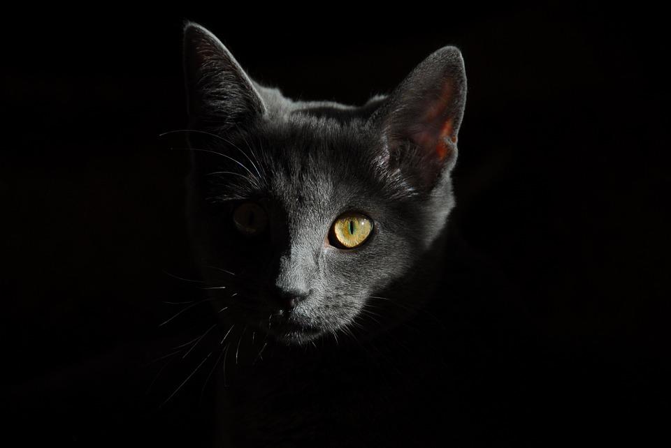 ¿Por qué mi gato es activo de noche?