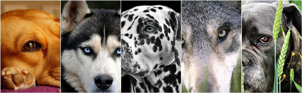 8 razas de perros exclusivas para personas experimentadas con perros