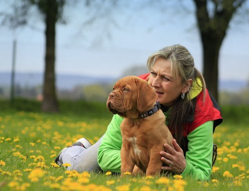 Los perros entienden lo que dices y cómo lo dices