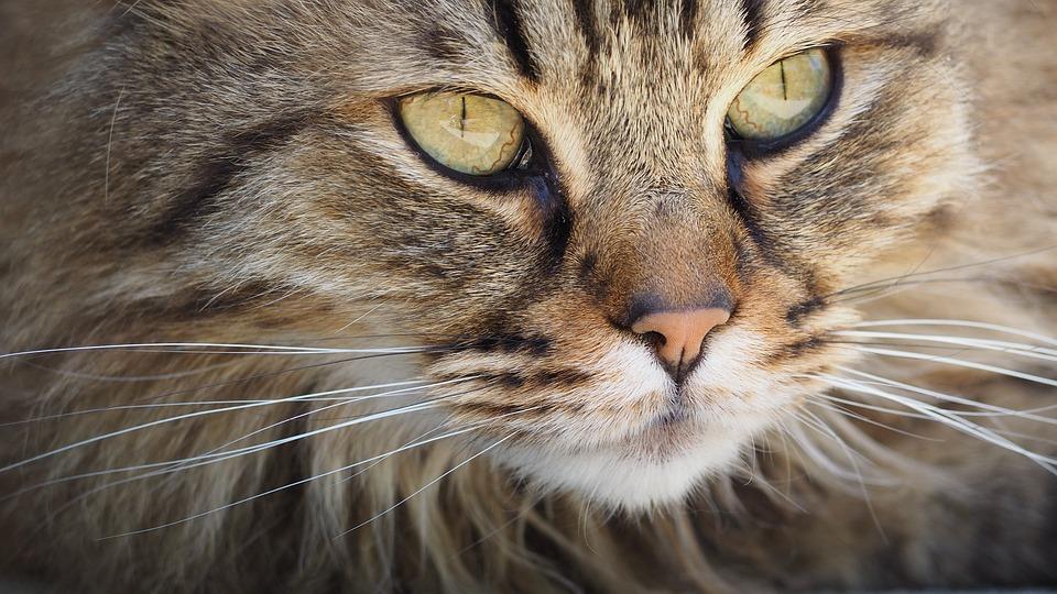 cat-1393075_960_720