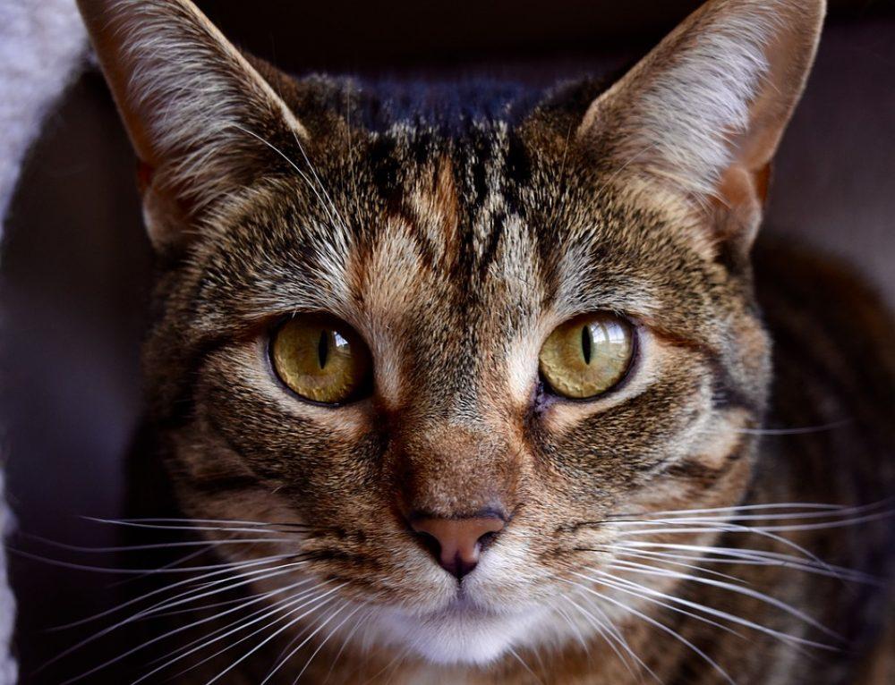 Mi gato tiene alergia a las pipetas, ¿qué hago?