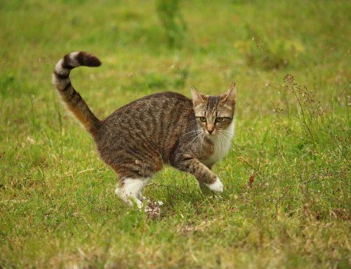 Por qué mi gato huele mal