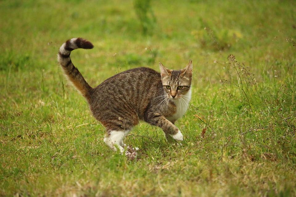 cat-1408094_960_720