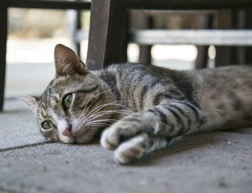 Consejos de seguridad para tu gato