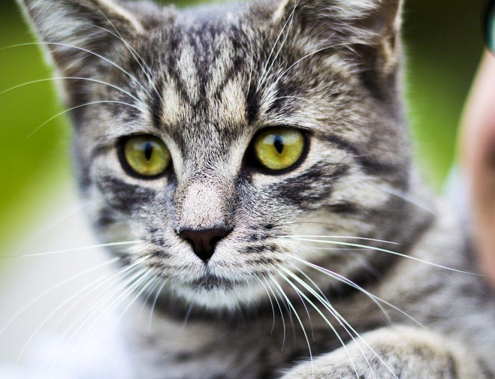 ¿Los gatos tienen buena memoria?