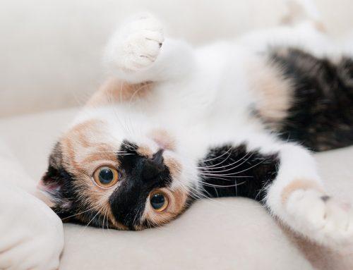 Qué hacer si el gato se orina en la cama