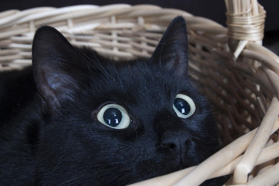 Entendiendo la frustración en gatos