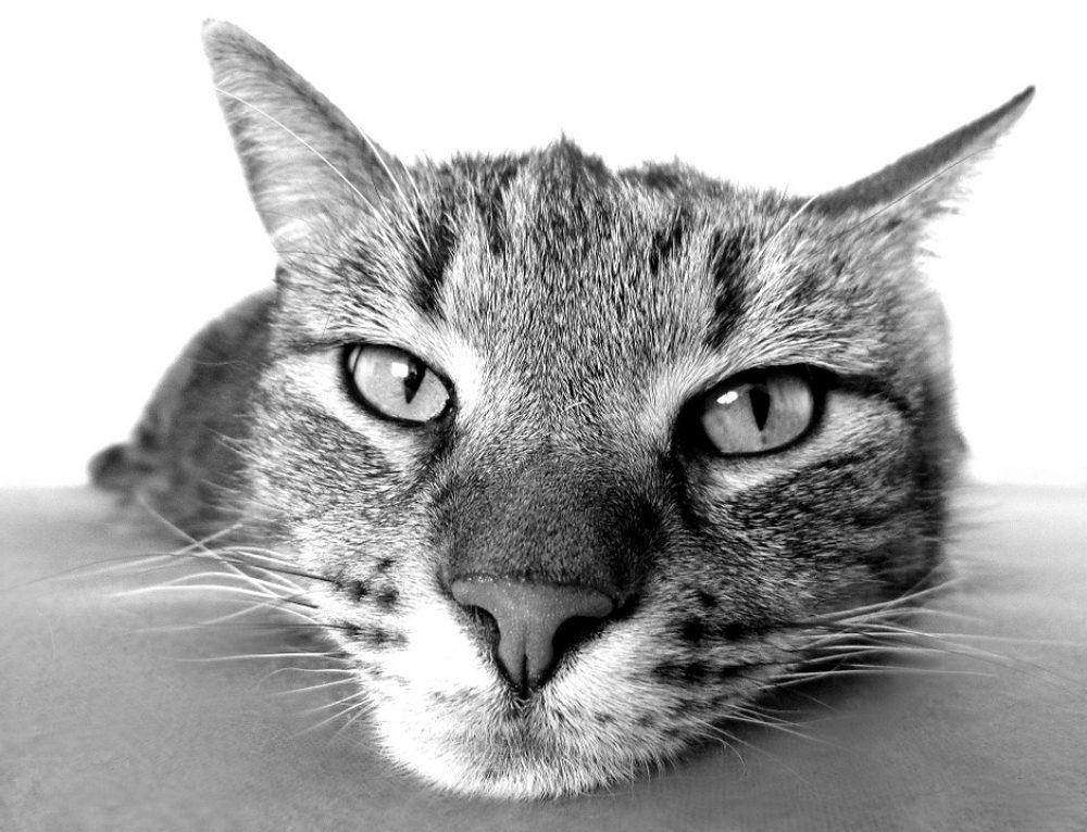 Gatos senior: cuidar a un gato mayor