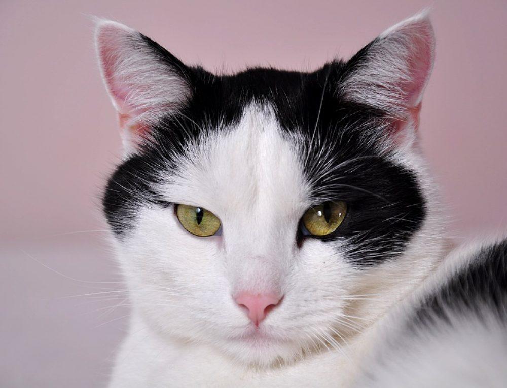 3 beneficios de tener un gato