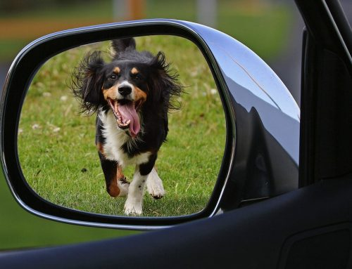 Consejos para viajar en coche con perros