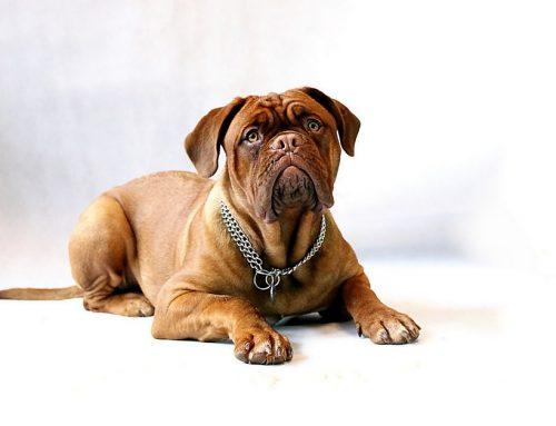 11 problemas de la piel en tu perro