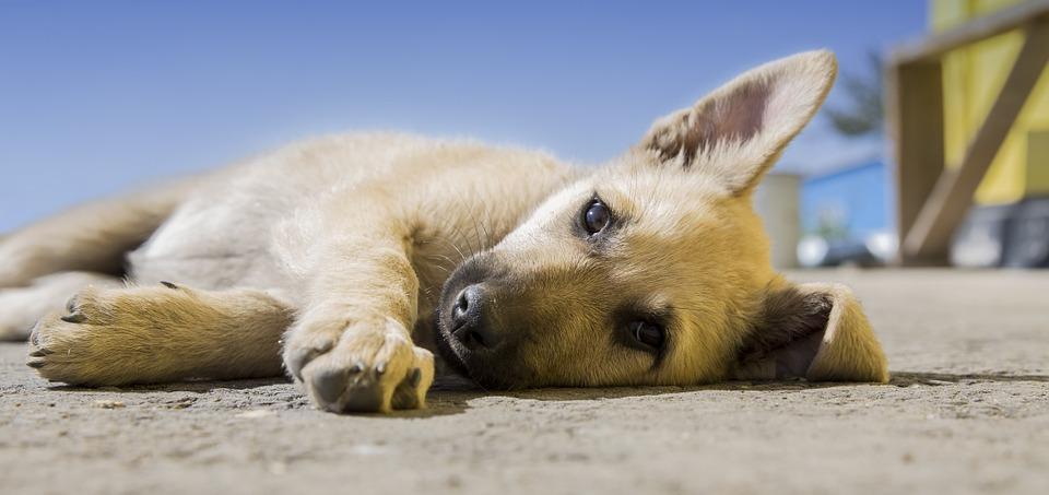 Beneficios de dormir junto a nuestro perro