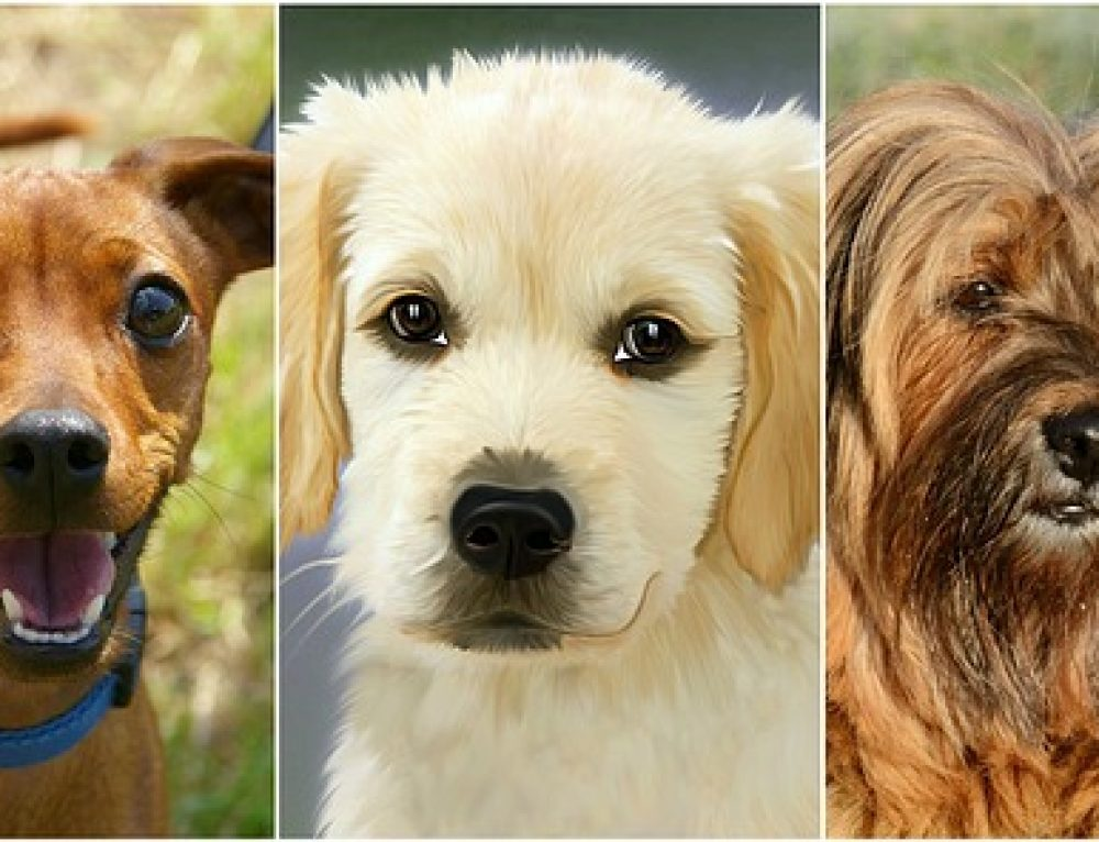 Razas de perros: el Coonhound