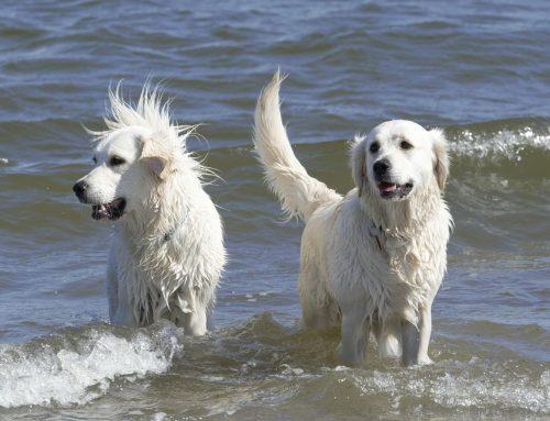 Cuidados para perros de pelo largo