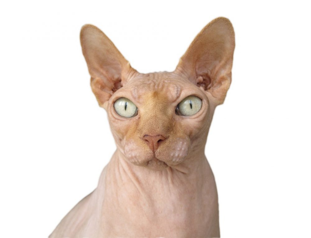 Cómo acercarse a un gato nervioso