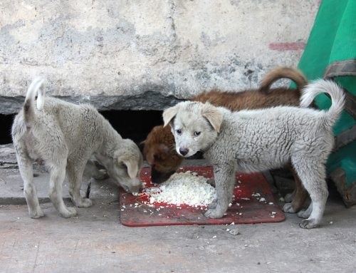 ¿Cómo identificar y ayudar a los perros callejeros?