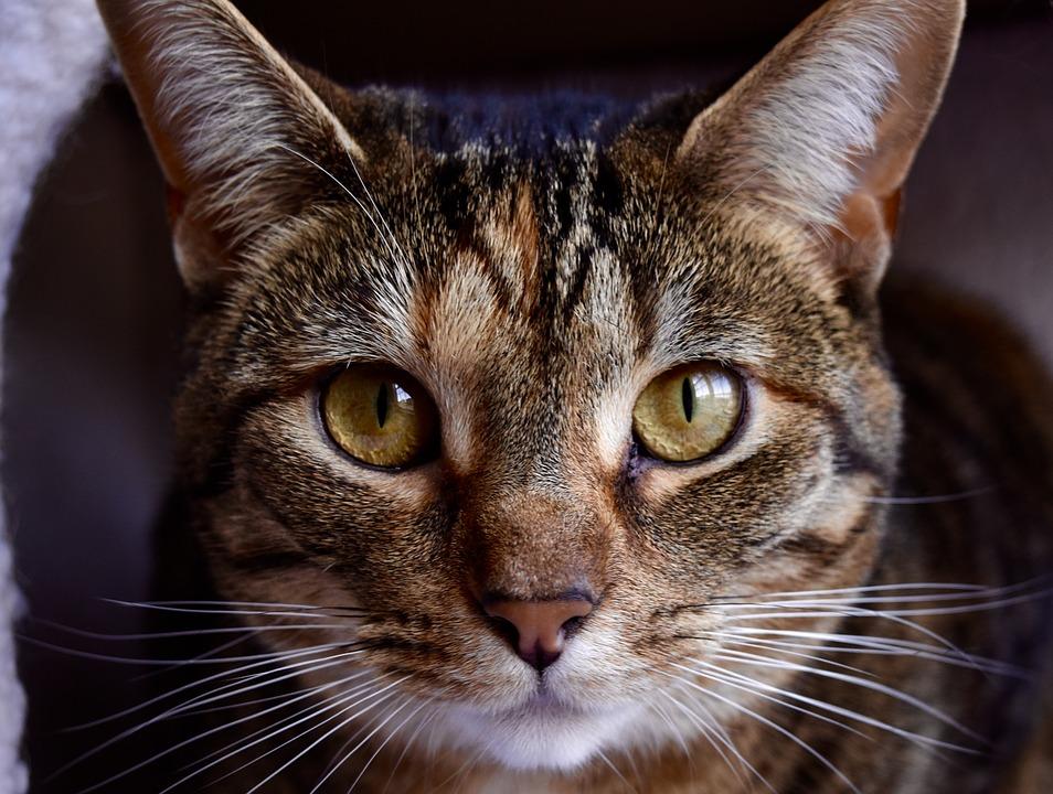 cat-1401637_960_720