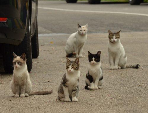 Lanai Cat Sanctuary, un paraíso para los amantes de los gatos en Hawái