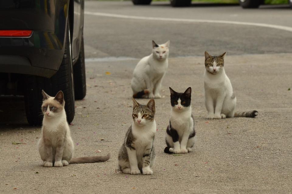 cat-1543541_960_720