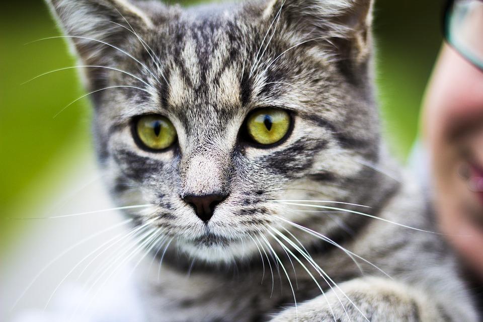cat-1549683_960_720