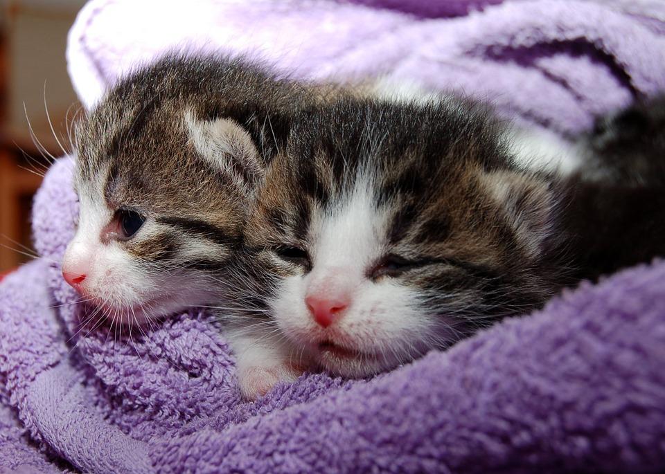 cat-205757_960_720