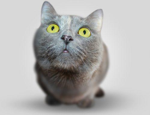 Cuánto tarda un gato en adaptarse a una casa