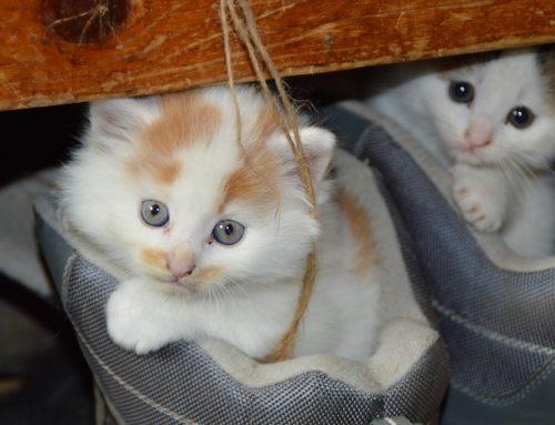 Guía de cuidados para gatitos recién nacidos huérfanos