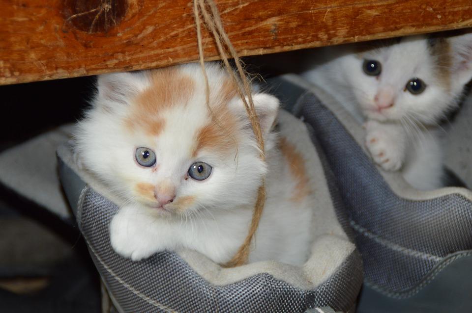 cat-451377_960_720