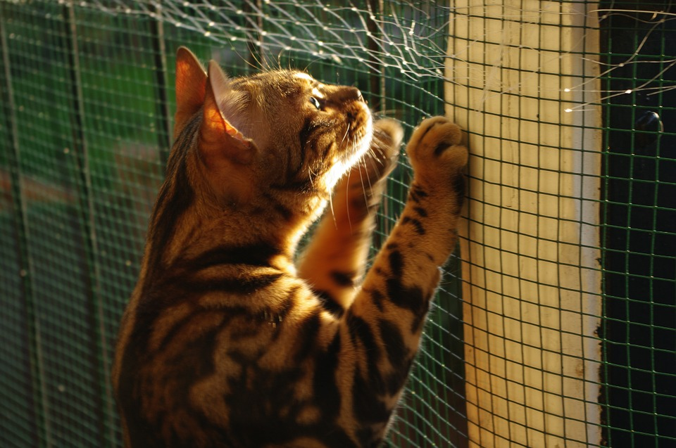 cat-955465_960_720