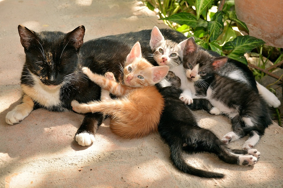 cats-1469477_960_720