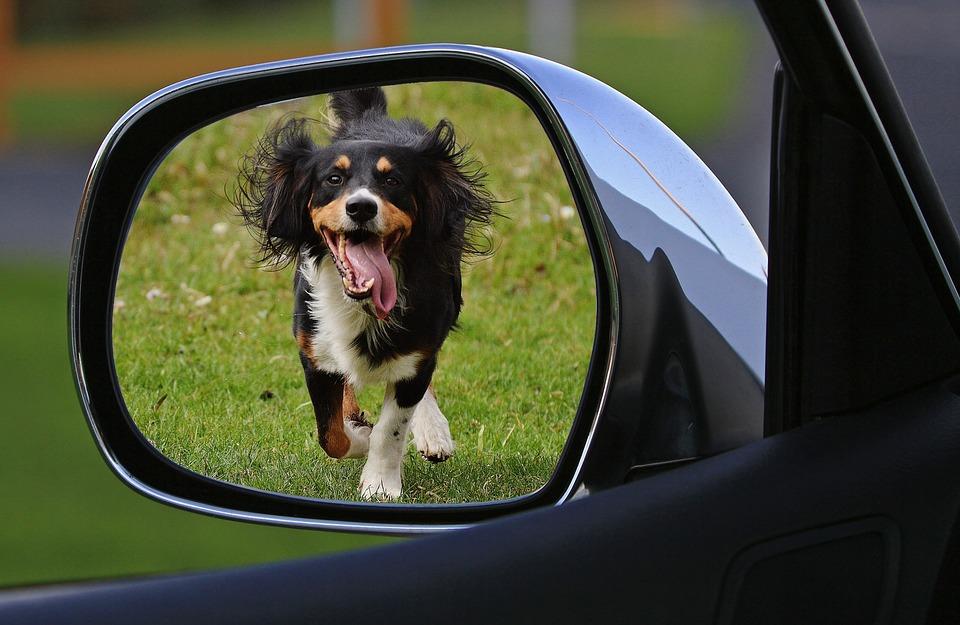 dog-1496904_960_720