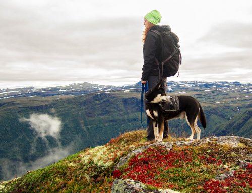 Cómo tratar la dependencia excesiva en el perro