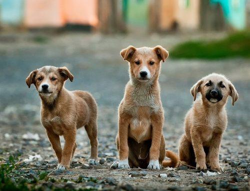Cómo adoptar un perro abandonado