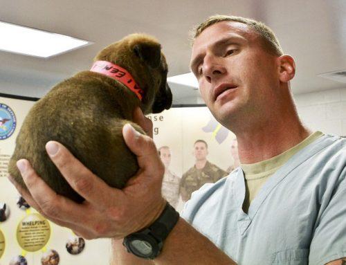 Cómo evitar el miedo al veterinario en los perros
