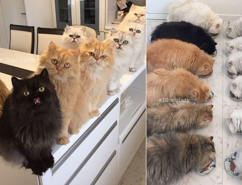 Los 12 gatos persas que se han hecho famosos en Internet