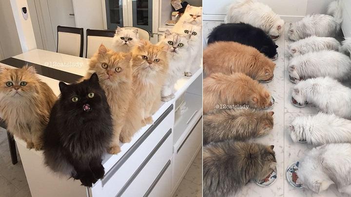 12-cats-lady-foto
