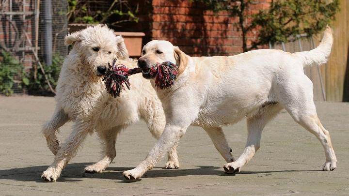 Los juguetes más peligrosos para los perros