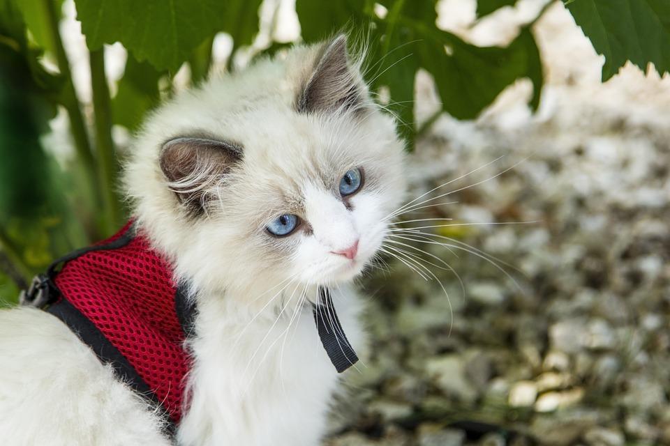 Por qué mi gato me huele