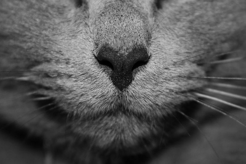 Mi gato tiene mocos, ¿qué le pasa?