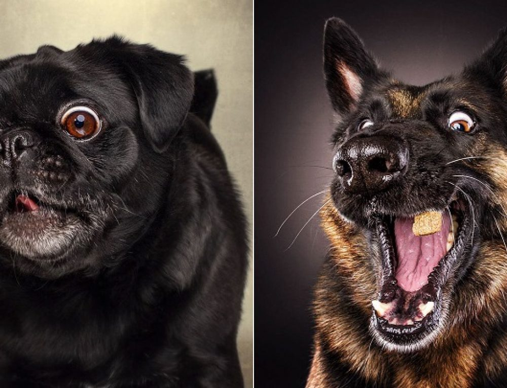 Divertidas fotos de perros hambrientos