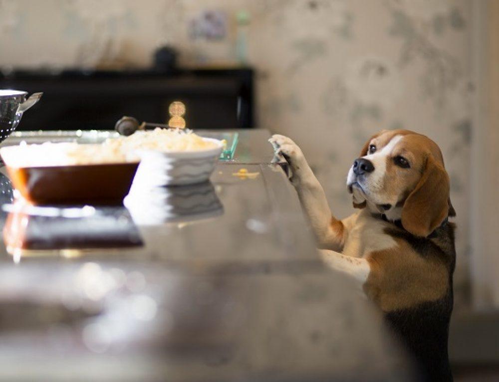 Alimentos humanos que pueden comer los perros